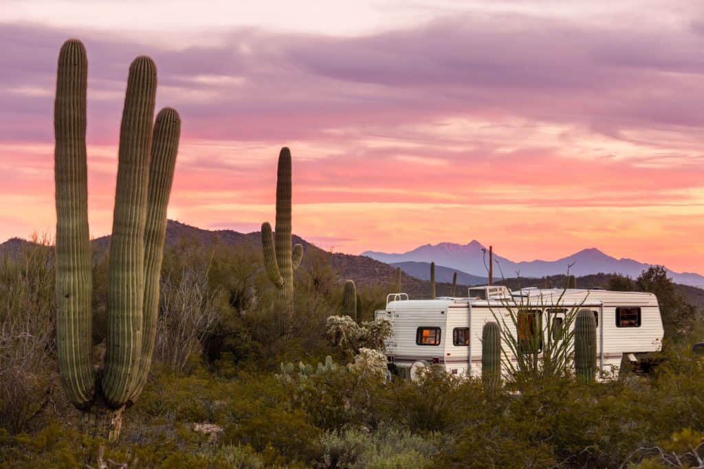 5th wheel in desert campground amidst tall cactus at dusk.