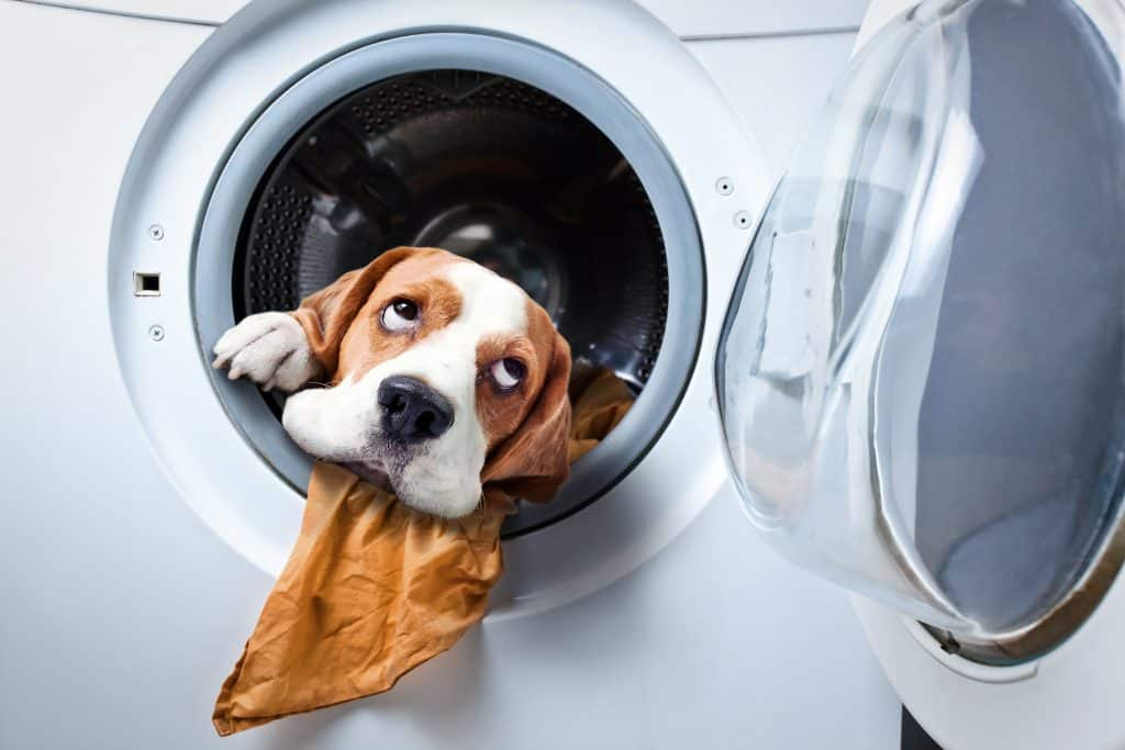 A dog in a dryer with its head poking out