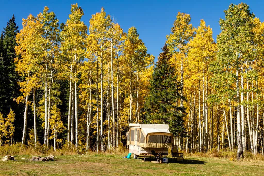 Pop-up camper sits on the edge of a wooded area.
