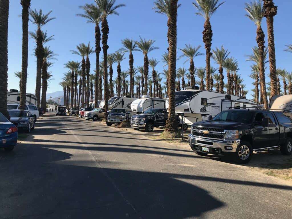 crowded RV park with date palms everywhere
