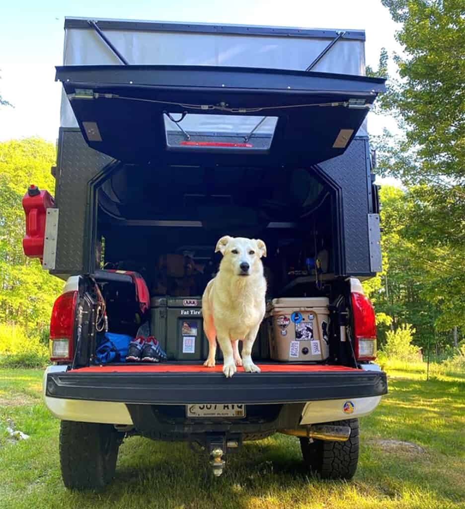 interior of camper shell with dog